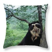 Spectacled Bear Cerro Chaparri  Peru Throw Pillow