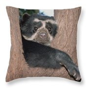 Spectacled Bear In Andean Foothills Peru Throw Pillow