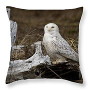 Spectacular Owl Throw Pillow