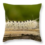 Speedy Throw Pillow by Lori Tambakis