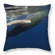 Sperm Whale Mother And Albino Baby Throw Pillow