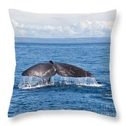 Sperm Whale Tail  Physeter Catodon Throw Pillow