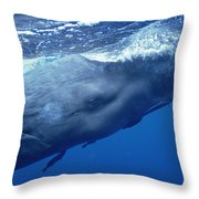 Sperm Whale With Remoras Dominica Throw Pillow