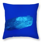 Sperm Whale With Remoras Throw Pillow