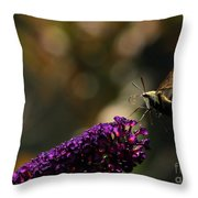 Sphinx Moth On Butterfly Bush Throw Pillow