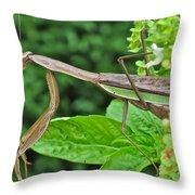Spice Stalker Throw Pillow