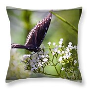 Spicebrush Swallowtail Butterfly Throw Pillow