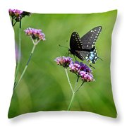 Spicebush Swallowtail Butterfly In Garden Throw Pillow