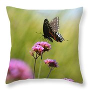 Spicebush Swallowtail Butterfly In Meadow Throw Pillow