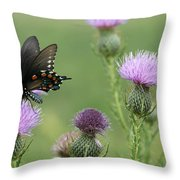 Spicebush Swallowtail Butterfly On Bull Thistle Wildflowers Throw Pillow