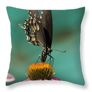 Spicebush Swallowtail Butterfly - Papilio Troilus Throw Pillow