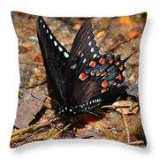 Spicebush Swallowtail Butterfly Preflight Throw Pillow