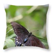 Spicebush Swallowtail Throw Pillow