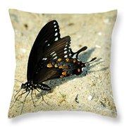 Spicebush Swallowtail Papilio Troilus  Throw Pillow