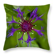 Spider Burst Throw Pillow