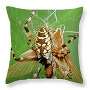 Spider Eating Moth Throw Pillow