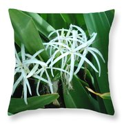 Spider Flower In Sint Maarten Throw Pillow
