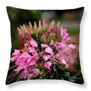 Spider Flower Throw Pillow