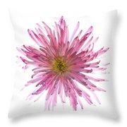 Spider Mum Flower Against White Throw Pillow