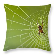 Spider Web With Dew Drops With Spider On Web Throw Pillow