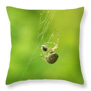 Spider Wrapping Its Food Throw Pillow