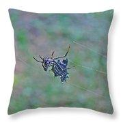 Spined Micrathena Orb Weaver Spider - Micrathena Gracilis Throw Pillow