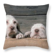 Spinone Puppies Throw Pillow