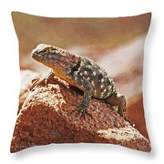 Spiny Swift Looks Over Its Domain Throw Pillow