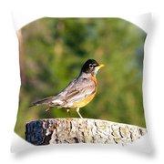 Spirited Robin Throw Pillow