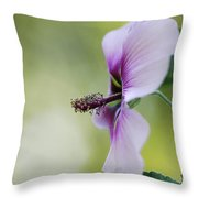 Splendor Throw Pillow