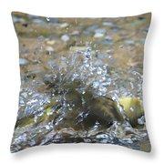 Splish Splash Bird Bath Throw Pillow