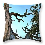 Spooky Bristlecone Pine At Spectra Point On Ramparts Trail In Cedar Breaks National Monument-utah  Throw Pillow