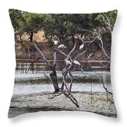 Spoonbill Gathering Throw Pillow