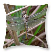 Spot Wing Glider Throw Pillow