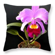 Spotlight On Purple Potted Cattleya Orchid Throw Pillow