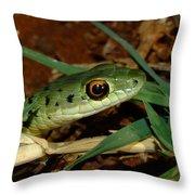 Spotted Bush Snake Philothamnus Semivariegatus Throw Pillow