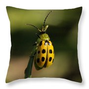 Spotted Cucumber Beetle Throw Pillow