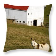 Spotted Donkey Looks Uninterested Throw Pillow