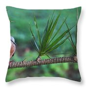 Spotted Dove Throw Pillow