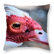 Spotted Feathers Throw Pillow