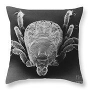 Spotted Fever Tick Throw Pillow