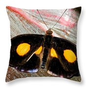 Spotted Grecian Shoemaker Butterfly Throw Pillow