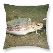 Spotted Hake Throw Pillow