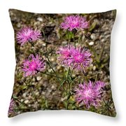 Spotted Knapweed Throw Pillow