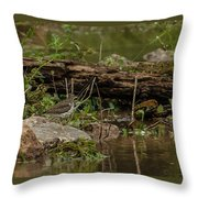 Spotted Sandpiper 2 Throw Pillow