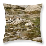 Spotted Sandpiper Pictures 36 Throw Pillow
