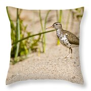 Spotted Sandpiper Pictures 45 Throw Pillow