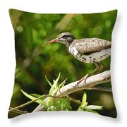 Spotted Sandpiper Pictures 48 Throw Pillow