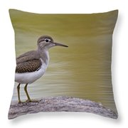 Spotted Sandpiper Pictures 51 Throw Pillow