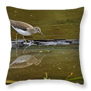 Spotted Sandpiper Pictures 61 Throw Pillow